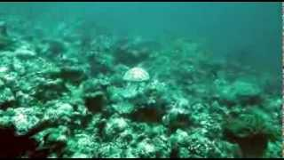 Atoll Explorer Diving Oct 13