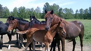 Как начать разводить коней
