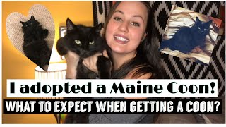 Watch this before getting a Maine Coon!!/What to expect | characteristics*character & care of Coons!