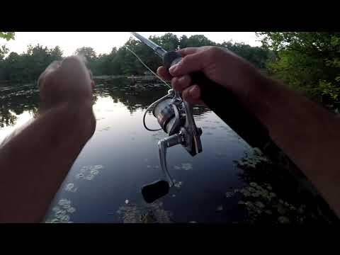 Bass Fishing - Springwater Pond