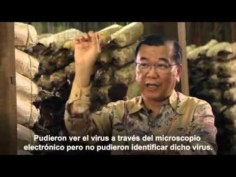 Entrevista con el Dr Lim Ganoderma y Spirulina el alimento completo