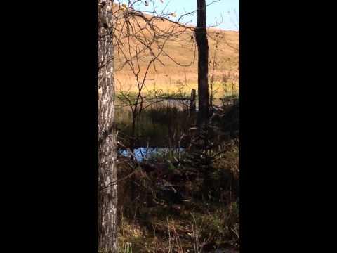 Beaver Activity Upstream of Goodwin Reservoir