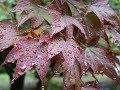 Вальс дождя /The Rain Waltz./(монтаж Н.Бурлакова)