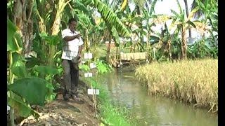 Paddy & fish mixed farming proves to be highly profitable - West Godavari farmer's experience.