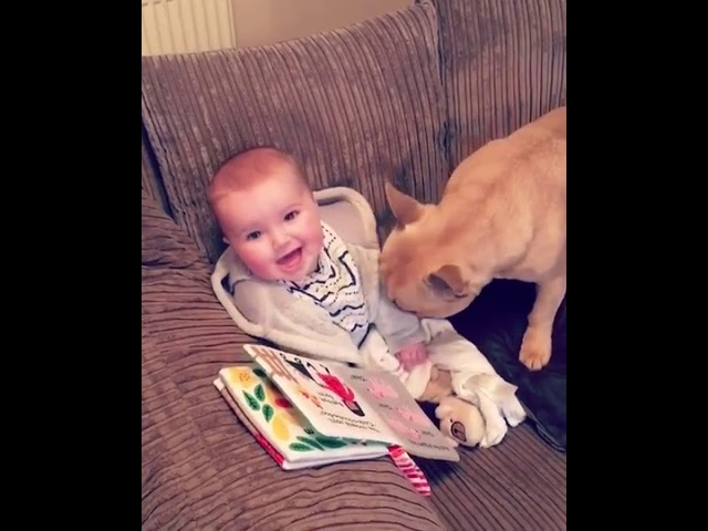 Toddler Giggles Adorably Whenever Tickled by French Bulldog – 1024543