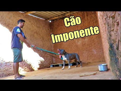 CÃO COM PERSONALIDADE FORTE AO MUDAR DE DONO REQUER ATENÇÃO REDOBRADA - BORA BRASIL