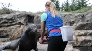 Oregon Coast Aquarium - Animal Husbandry
