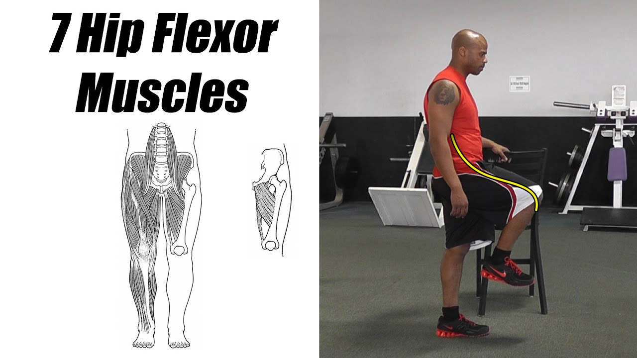 7 Hip Flexor Muscles. A.K.A. Thigh Flexor Muscles. Psoas, Iliacus ...