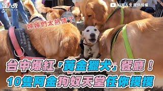 【台中爆紅「黃金獵犬」餐廳  10隻阿金狗奴天堂任你摸摸 】Ki笑人生