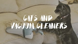 Cats And Vacuum Cleaners Compilation 2017