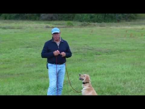 The electric collar and Positive Reinforcement - Lesson 5