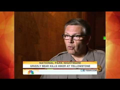Grizzly bear kills hiker in Yellowstone