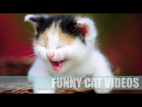 Funny Cat Fails