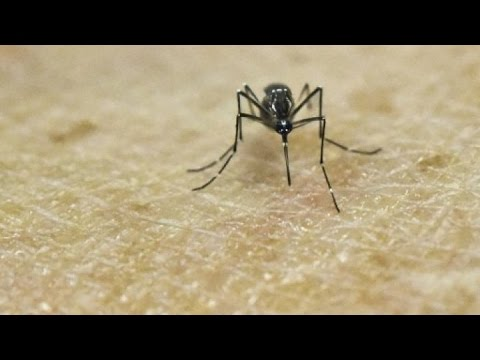 Zika outbreak: Globalisation and tropical diseases (part 2) - #F24Debate