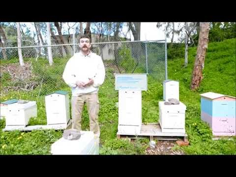 Honey Bee swarm rescue - The Practical Beekeeper, Melbourne