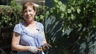 How To Prune Grapevines In A Grape Arbor : Garden Space