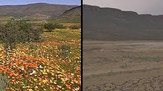 Цветущая долина ЮАР превратилась в пустыню из-за засухи (новости)