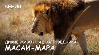Мир Приключений - Жизнь животных заповедника Масай Мара. Лучший отдых в Кении. Masai Mara. Kenia.