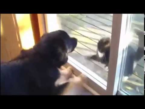 funny animals - love story (dogs, cats, duck...)