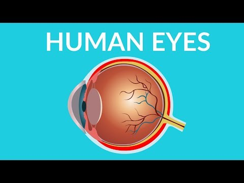 Human Eyes | Human Eye Structure and Functions