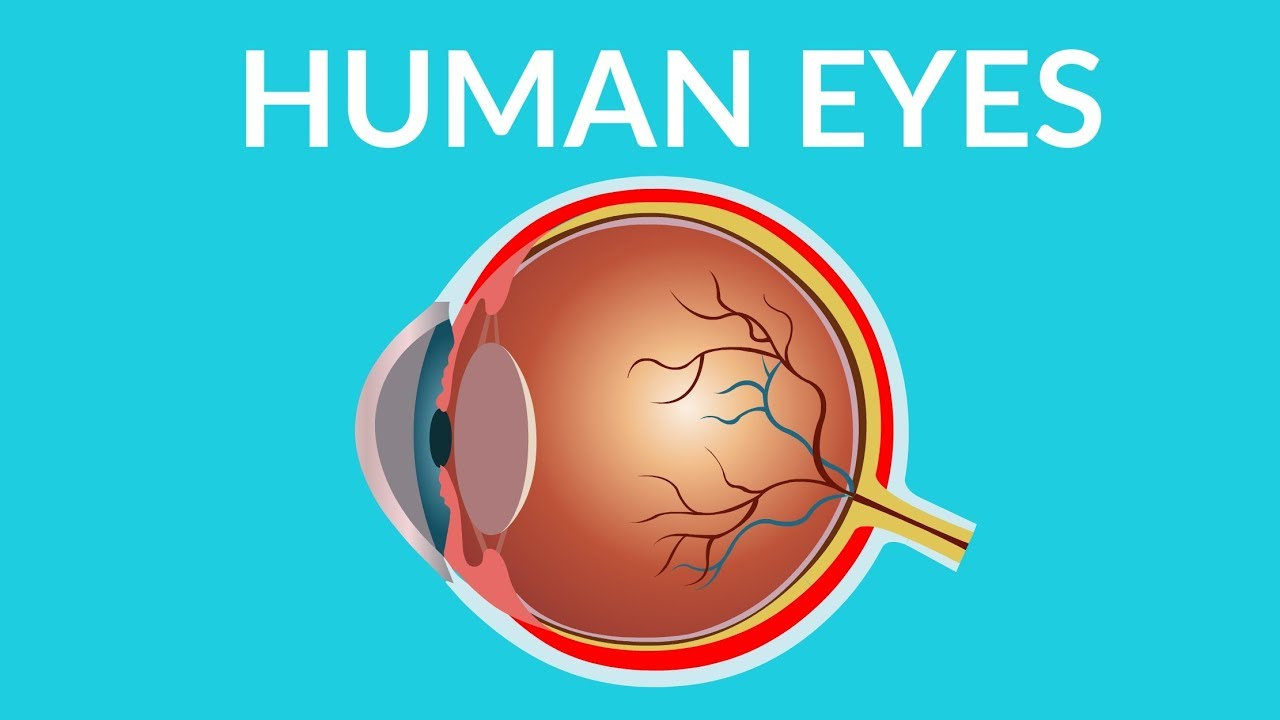 Human Eye Structure And Functions Human Eye Video For Kids