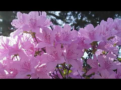 Natural Beauty of Spring Season Butterflies, Birds and Beautiful Flowers- Most Relaxing video