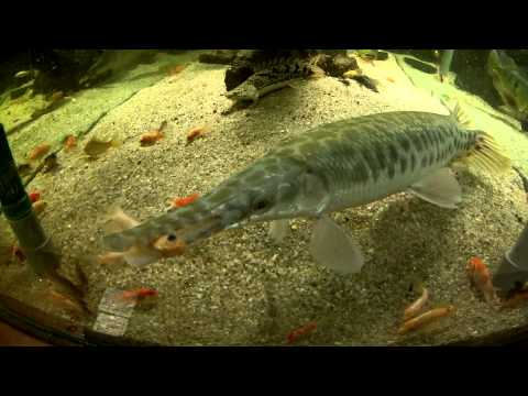 Predator fish Tank.