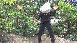 Bắt Tổ Ong Cực Hung Dữ Cặp Vách Nhà/honey bee