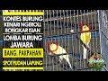 Kontes Kenari Kenari Yellow Ngerol Bongkar Isian Saat Di Gantang Lomba Kenari  Mp3 - Mp4 Download