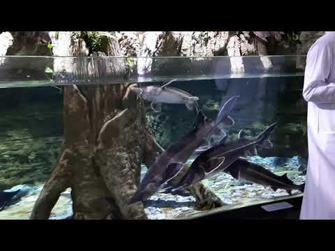 Dubai Aquarium & Underwater Zoo 2020