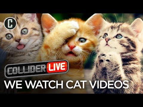 We Watch Cat Videos - Collider Live #63