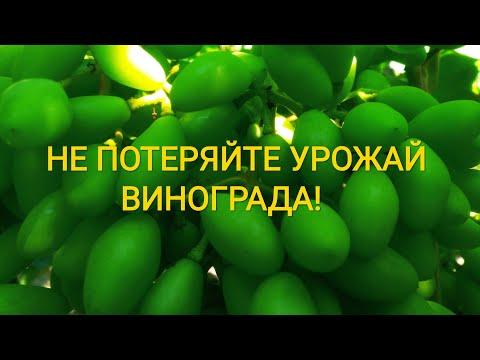Не потеряйте урожай на Тройке Крайнова!
