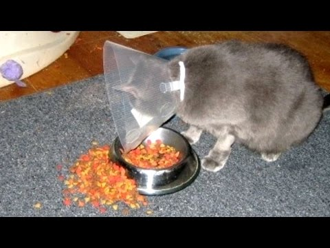 IF YOU LAUGH, YOU LOSE - The funniest ANIMAL videos ever!