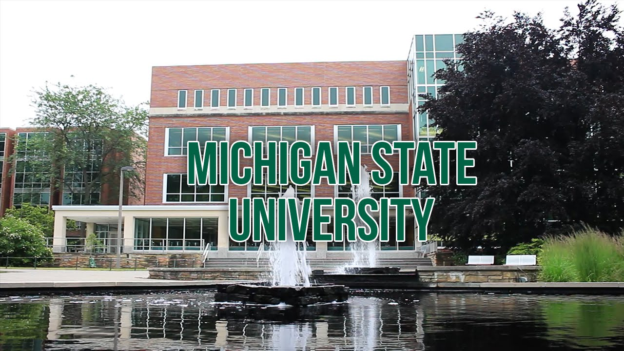 Michigan state application essay