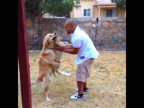 Pet cat dog attack on owner