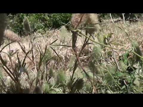 Community Work In The Heart Of France! France/Spain Vlog Pt3!