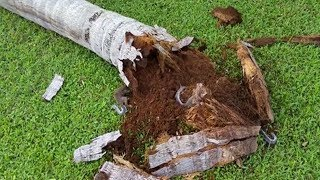 Tree At Front Of Their Yard Falls Down- But what They Found Inside They're Scared