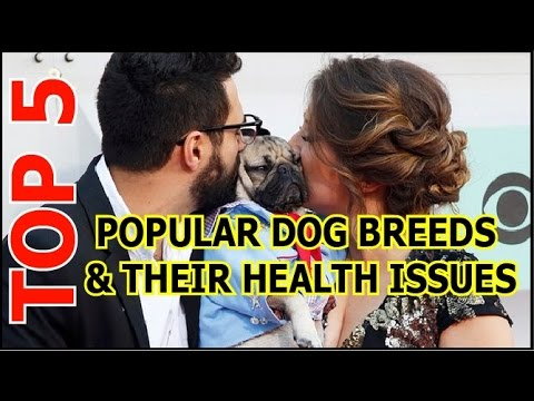 Top 5 Popular Dog Breeds and Their Health Issues (dog breeds)