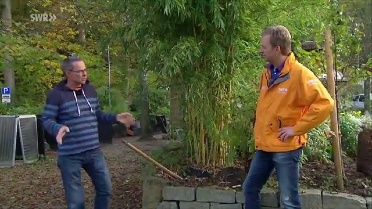 Bambus Youtube