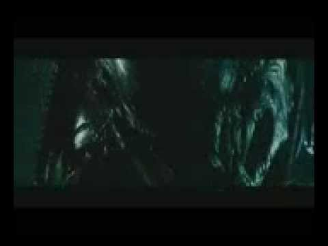 PredAlien vs Wolf Predator - YouTube