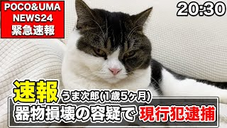 凶悪な猫を緊急逮捕しました!