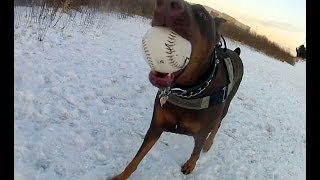 Cinema Dog Park, Ancaster Ontario - Zeus & Friends Havin' Fun 2015