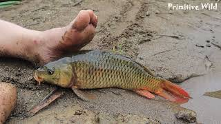 Skills Survival: Smart Girl Find Fish Meet Fish With Eggs Wild - Primitive Life Is Hard