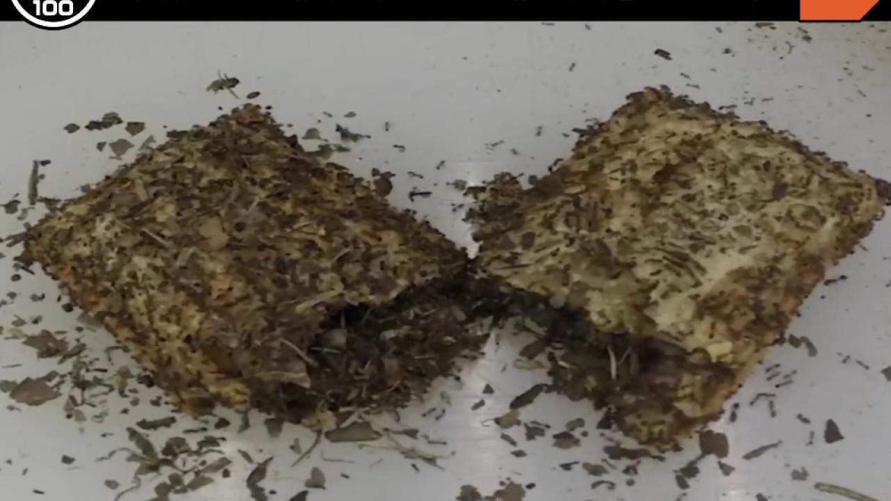 【Fun鬆】食物測試:當螞蟻碰上蘋果派 - YouTube