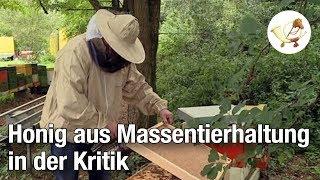 Tierschützer kritisieren Herstellung von Honig aus Massentierhaltung