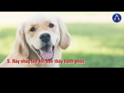 [BÀI HỌC CUỘC SỐNG] - 10 Bài Học Về Cách Sống Của Loài Chó