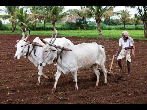 Organic Farming Fair in Honnavar_ಹೊನ್ನಾವರದಲ್ಲಿ ನಡೆದ ಸಾವಯವ ಕೃಷಿ ಮೇಳದ ವರದಿ