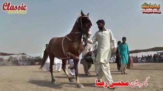 63Best Horse Dance Punjab Meerik Sial Jhang 2018/ Bani Syed Qalandar Sultan