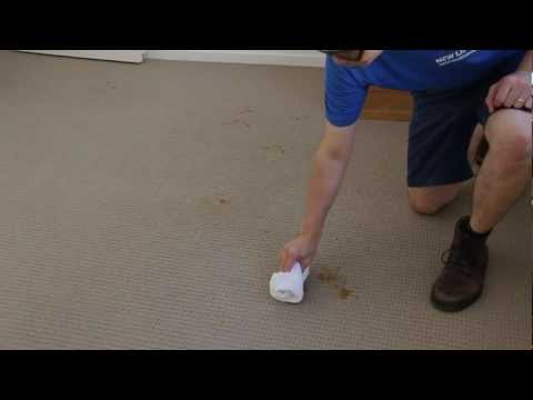 How to Remove Poop From Carpet