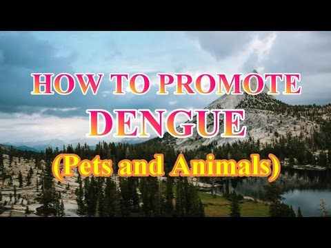 HOW TO PROMOTE DENGUE (Pets and Animals)